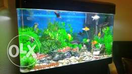 Beautiful Fish Aquarium for sale SR 900