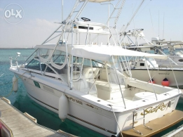Sea Ray 310 AJ Excellent Condition