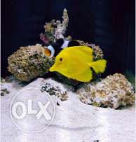 Marine Aquarium for Sale - SAR 2000